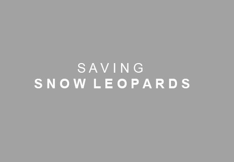 SAVING SNOW LEOPARDS